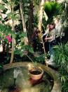 View The 2015 - Vårutflykt till Kaisaniemi botaniska trädgård Album